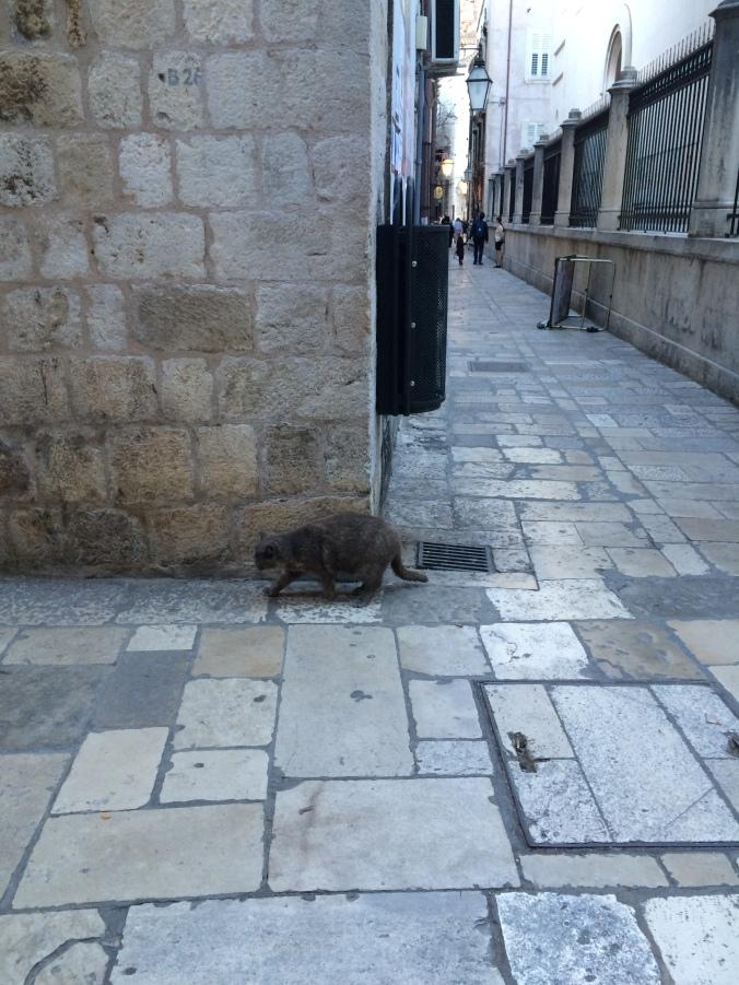 Blonde in Grey - Island Hopping in Dubrovnik (14)