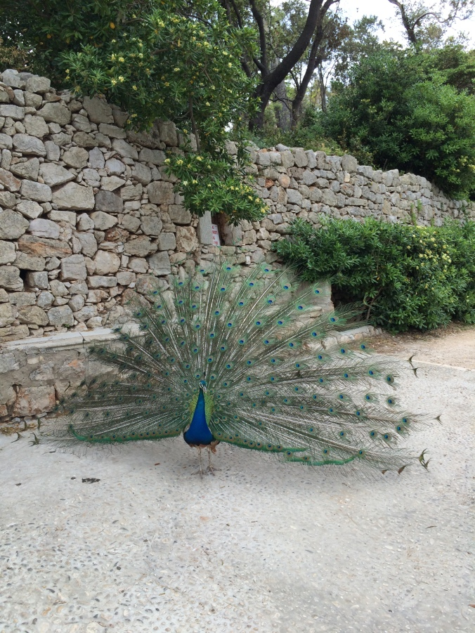 Dubrovnik Explorations (8)