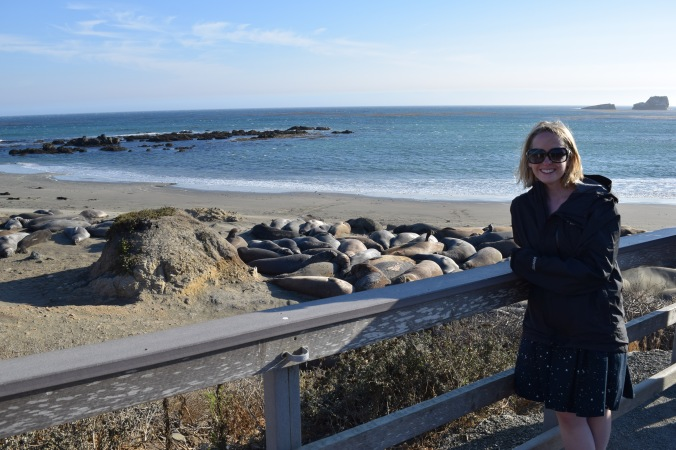 Big Seals and Big Sur (7)