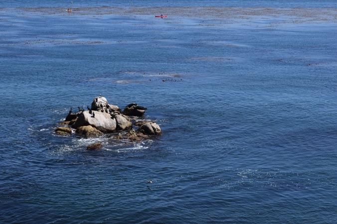 Monterey Bay Aquarium (10)