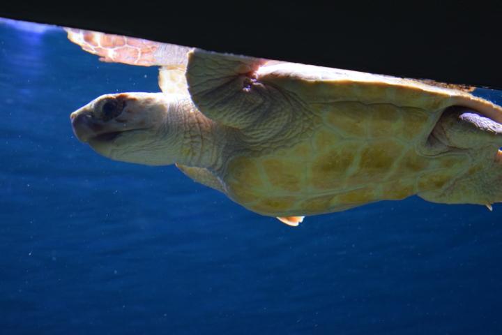 Monterey Bay Aquarium (12)