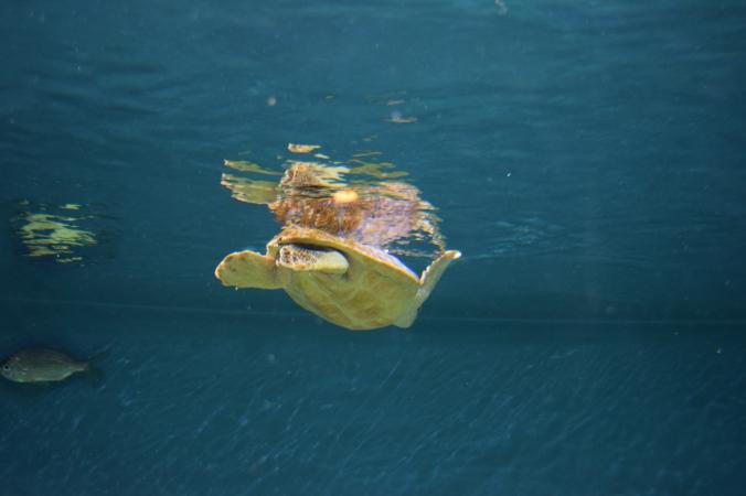 Monterey Bay Aquarium (13)