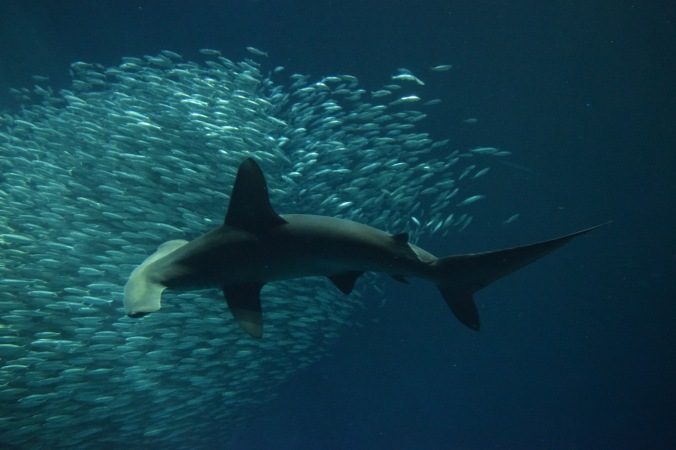 Monterey Bay Aquarium (15)