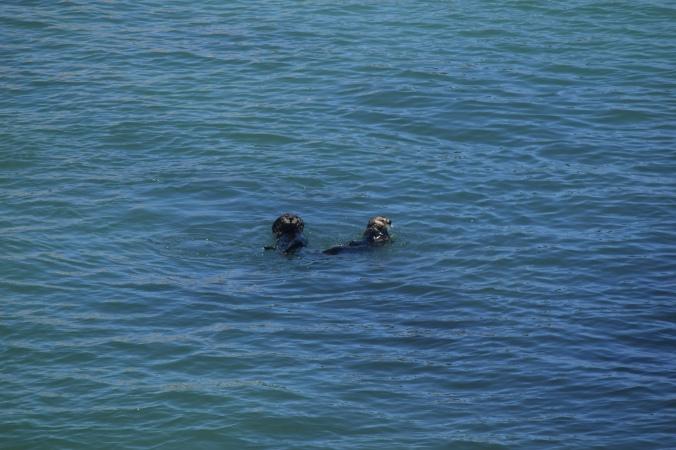 Monterey Bay Aquarium (16)