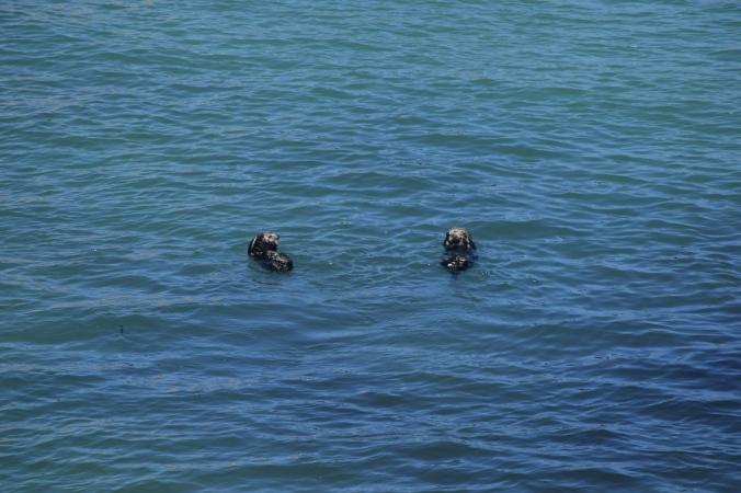 Monterey Bay Aquarium (17)