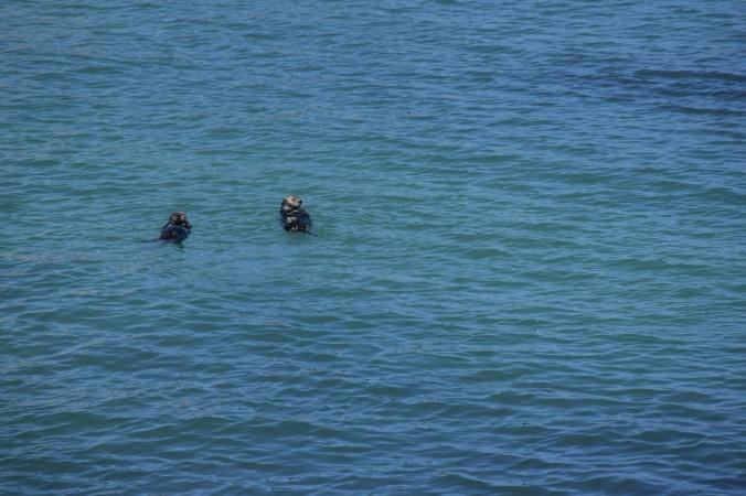 Monterey Bay Aquarium (18)