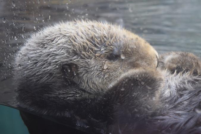 Monterey Bay Aquarium (20)
