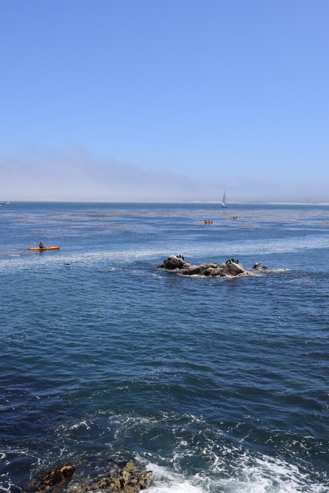 Monterey Bay Aquarium (21)
