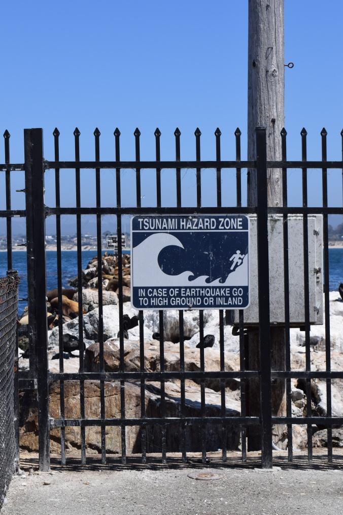 Monterey Bay Aquarium (27)