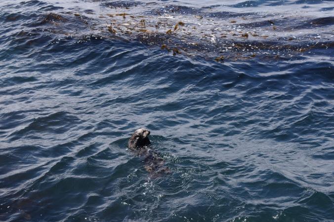 Monterey Bay Aquarium (29)