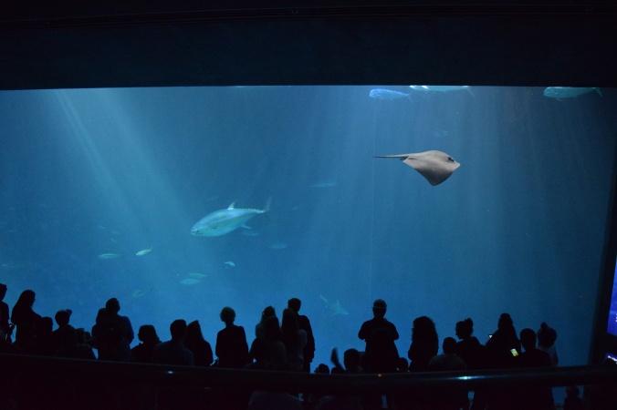 Monterey Bay Aquarium (3)