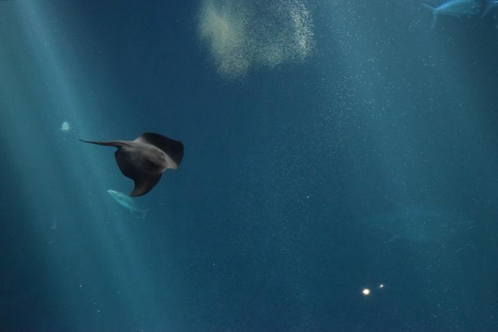 Monterey Bay Aquarium (4)