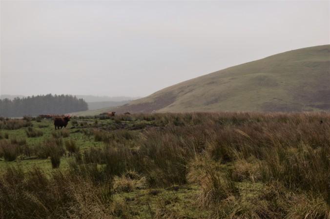 scotland-part-3-12