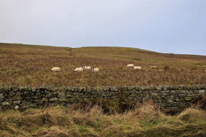 scotland-part-3-17